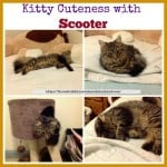 kitty cuteness with scooter