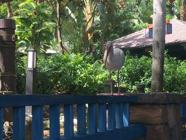 Bird at Flame tree bbq at animal kingdom