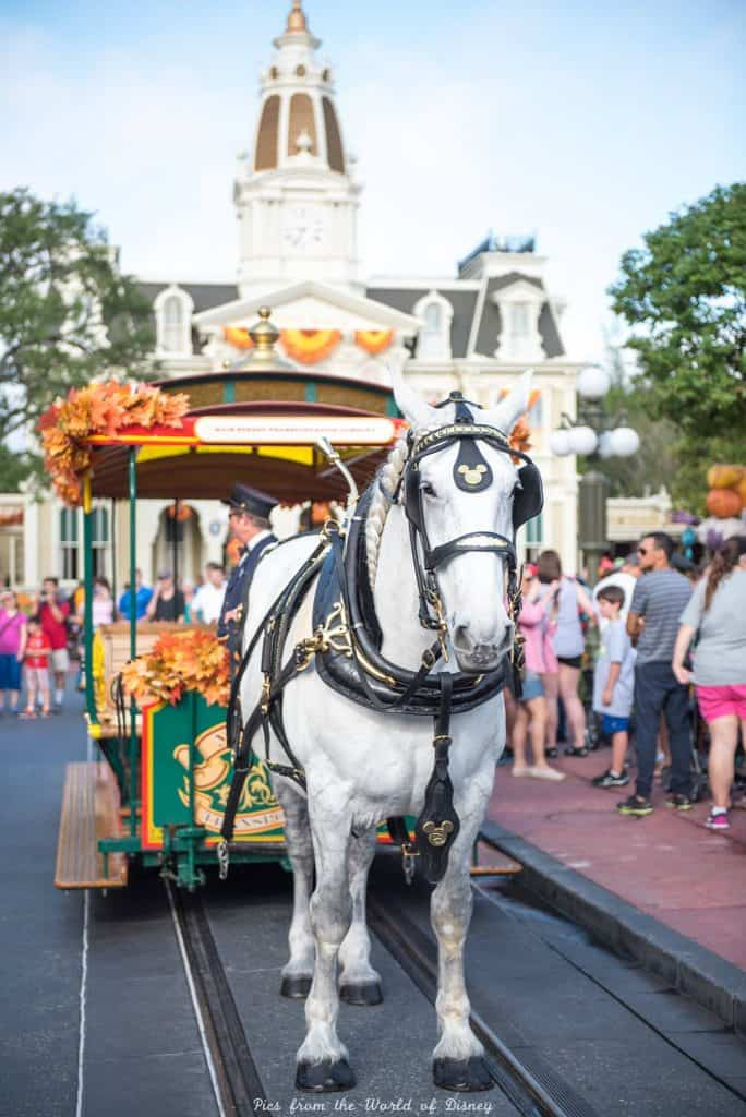 Horse and Trolley on Main Street in Magic Kingdom