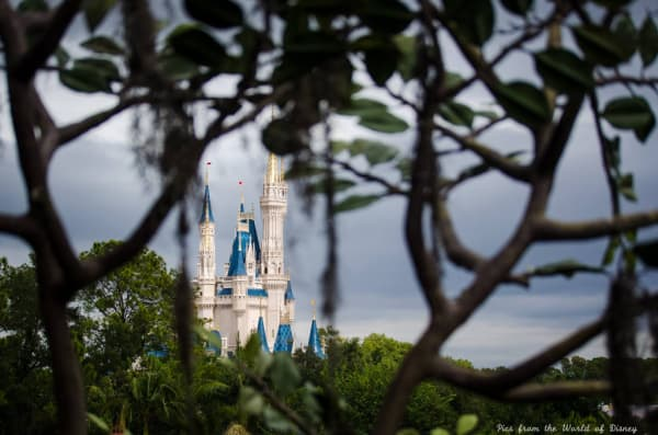 Swiss Family Robinson Treehouse  Disney World attraction