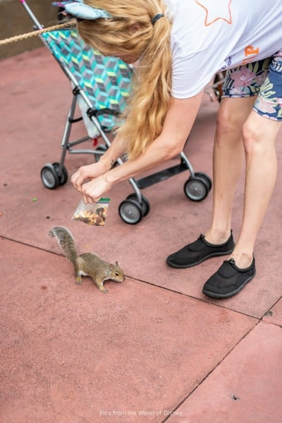 Squirrel at Disney World