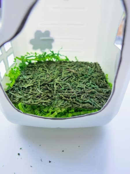 Moss laid on top of shredded green paper
