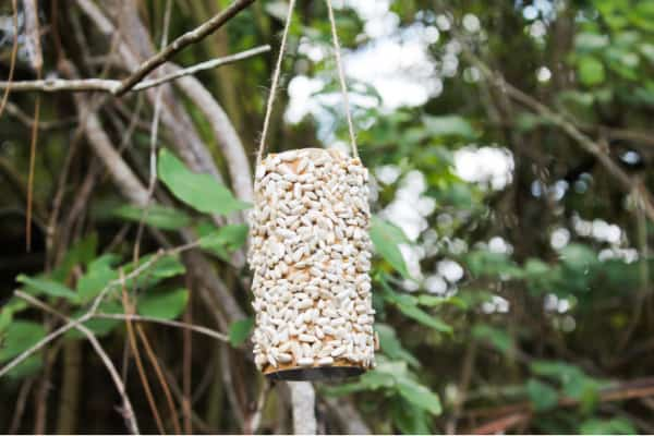 DIY Bird feeder outside in tree