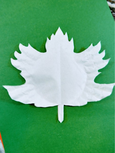 Maple leaf coffee filter unfolded 2