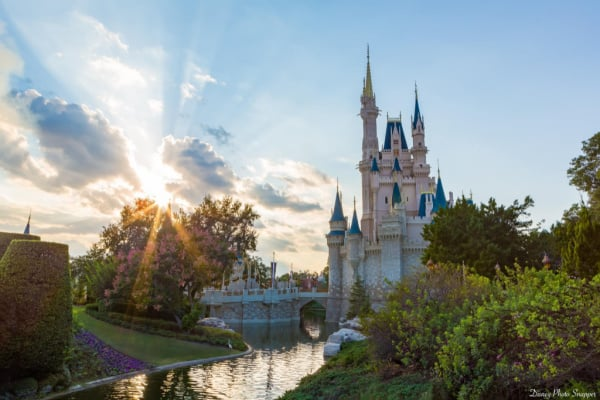 Best Soft Coolers for Disney World